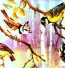 Птицы наших лесов