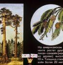 Удивительные растения